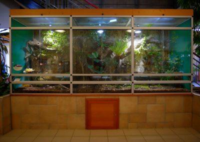 schmetterlingshaus-terrarium-web