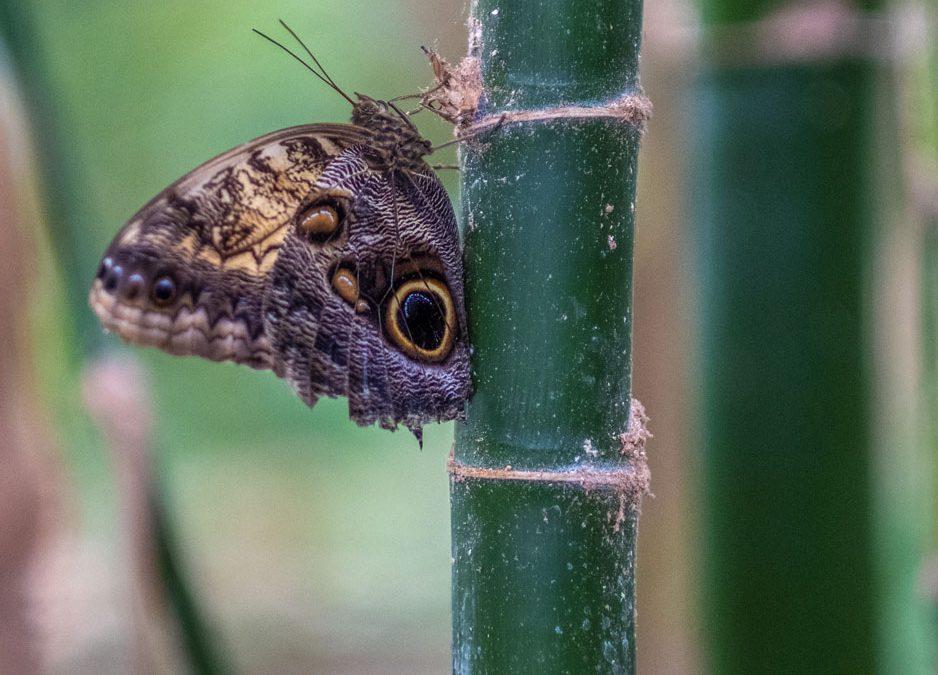 Motýlí dům Jonsdorf