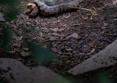 schmetterlingshaus-schildkröte